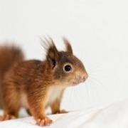squirrel 4466632 1280